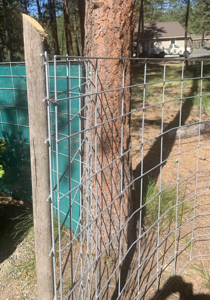cattle panel door